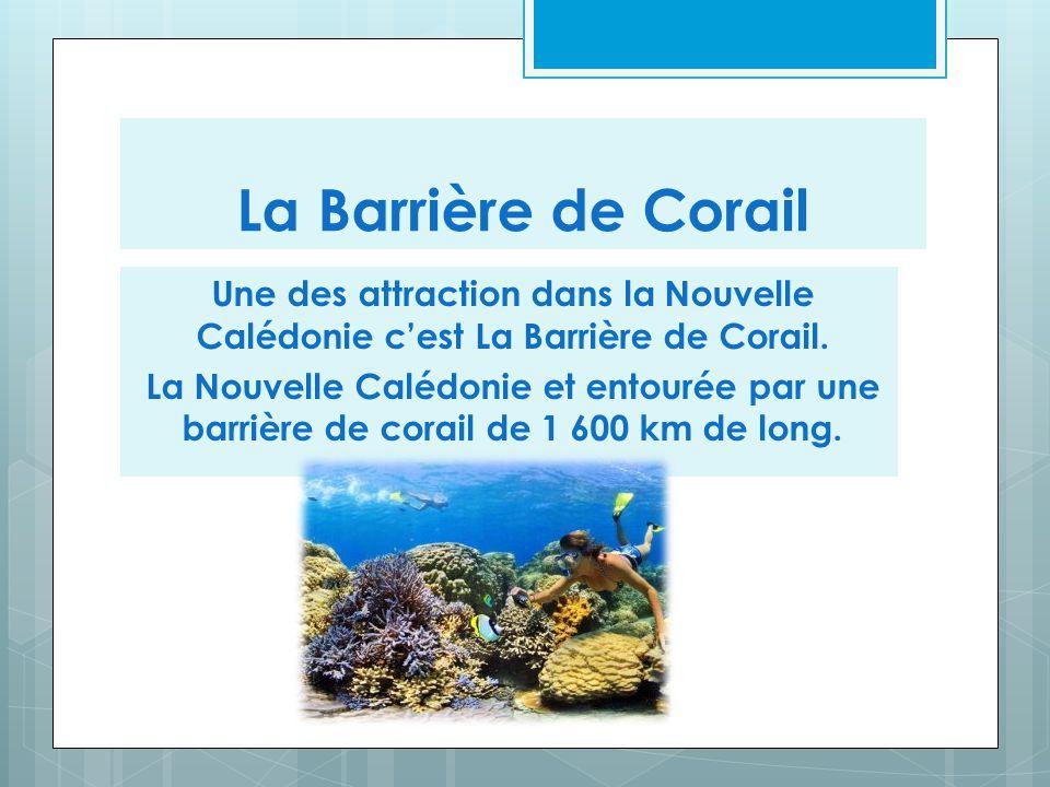 La Barrière de Corail Une des attraction dans la Nouvelle Calédonie c'est La Barrière de Corail. La Nouvelle Calédonie et entourée par une barrière de