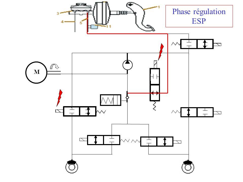 M Phase régulation ESP