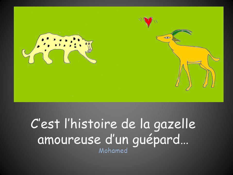 C'est l'histoire de la gazelle amoureuse d'un guépard… Mohamed