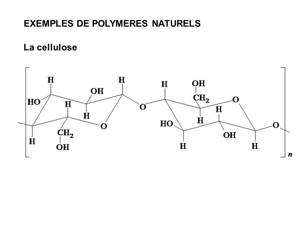La cellulose EXEMPLES DE POLYMERES NATURELS