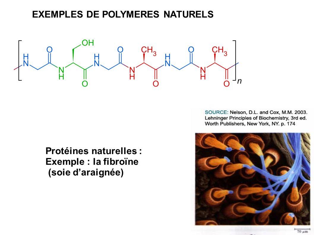 Protéines naturelles : Exemple : la fibroïne (soie d'araignée) EXEMPLES DE POLYMERES NATURELS