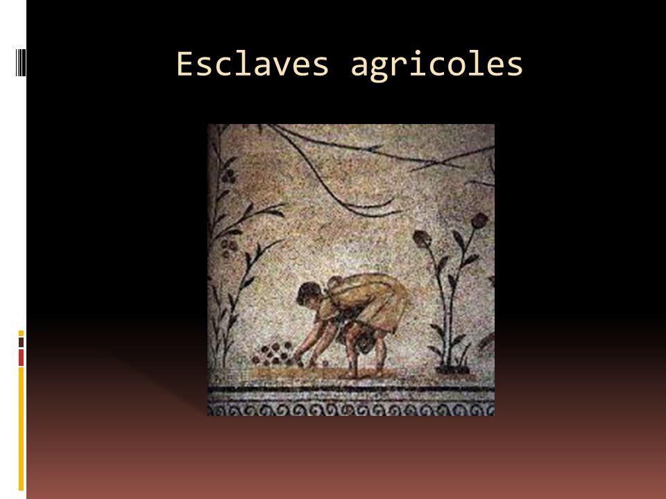 Esclaves agricoles