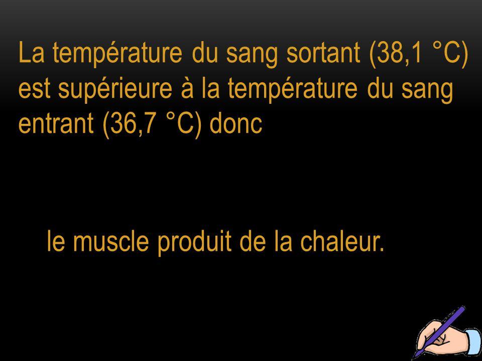 La température du sang sortant (38,1 °C) est supérieure à la température du sang entrant (36,7 °C) donc le muscle produit de la chaleur.
