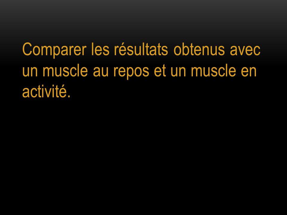 Comparer les résultats obtenus avec un muscle au repos et un muscle en activité.