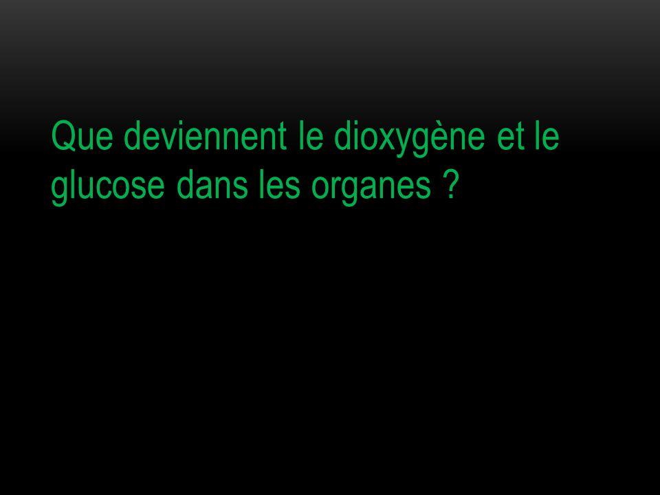 Que deviennent le dioxygène et le glucose dans les organes ?