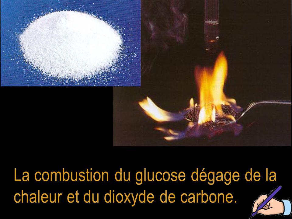 La combustion du glucose dégage de la chaleur et du dioxyde de carbone.