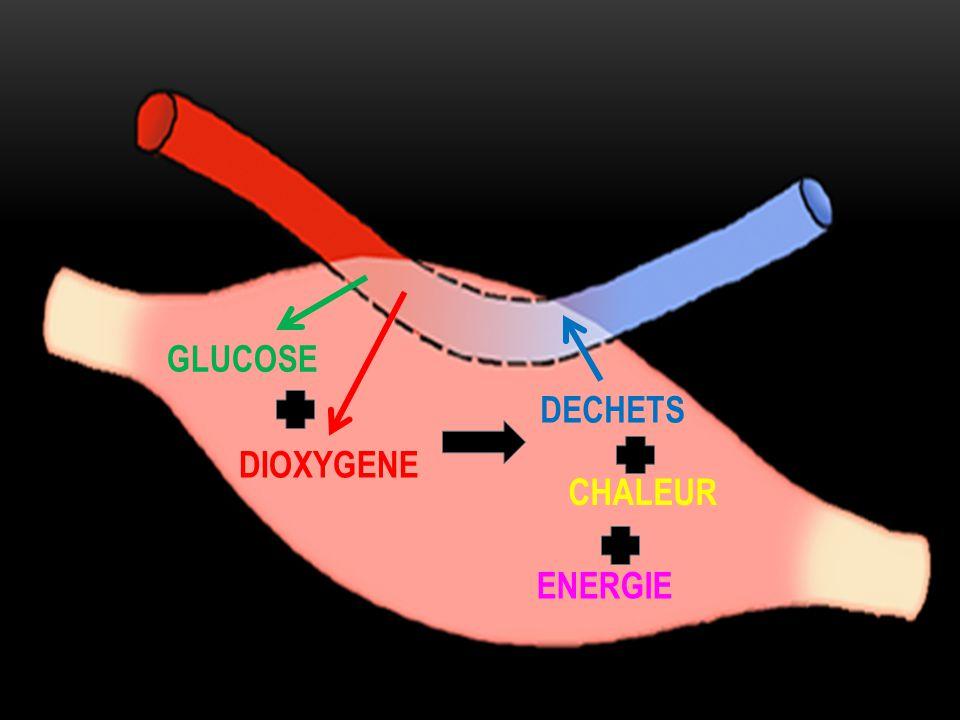 GLUCOSE DIOXYGENE DECHETS CHALEUR ENERGIE