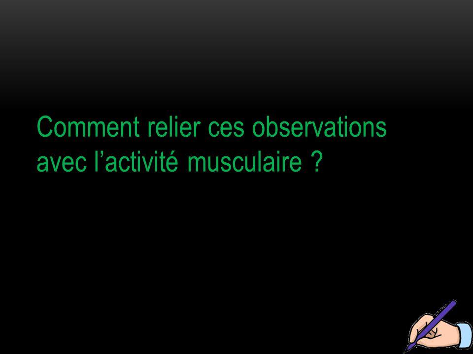 Comment relier ces observations avec l'activité musculaire ?
