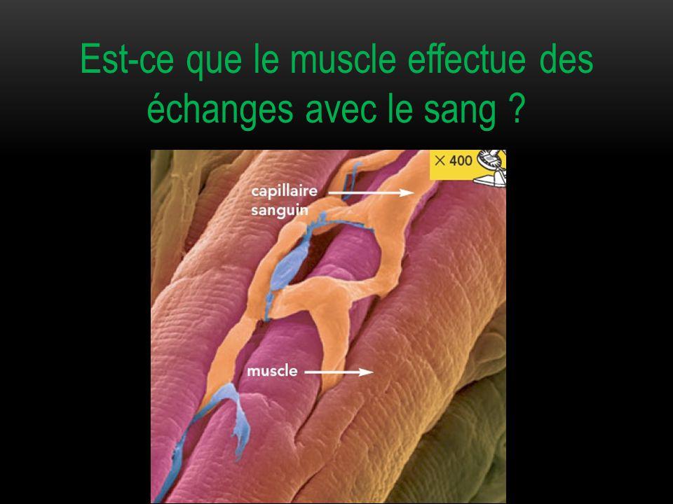 Est-ce que le muscle effectue des échanges avec le sang ?