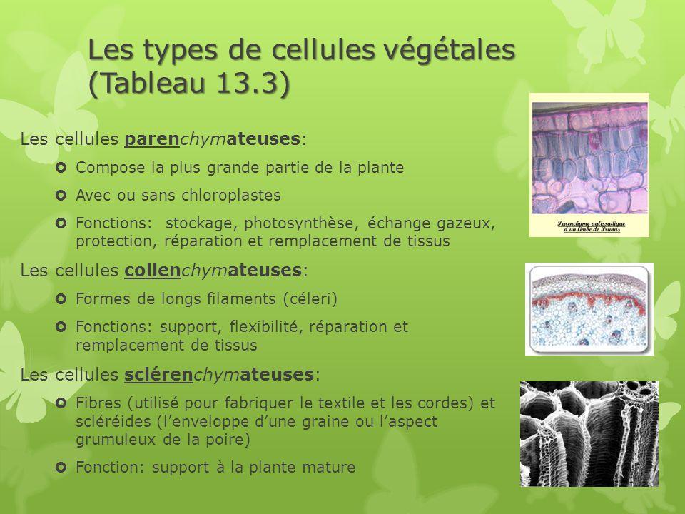 Les types de cellules végétales (Tableau 13.3) Les cellules parenchymateuses:  Compose la plus grande partie de la plante  Avec ou sans chloroplaste