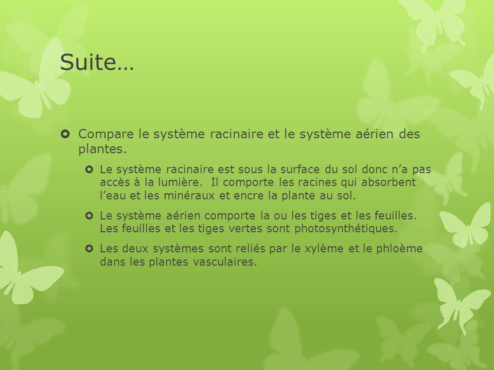 Suite…  Compare le système racinaire et le système aérien des plantes.  Le système racinaire est sous la surface du sol donc n'a pas accès à la lumi