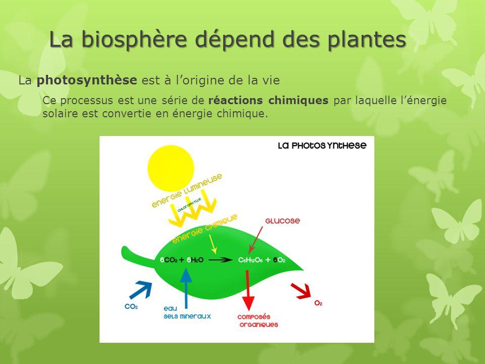 La biosphère dépend des plantes La photosynthèse est à l'origine de la vie Ce processus est une série de réactions chimiques par laquelle l'énergie so