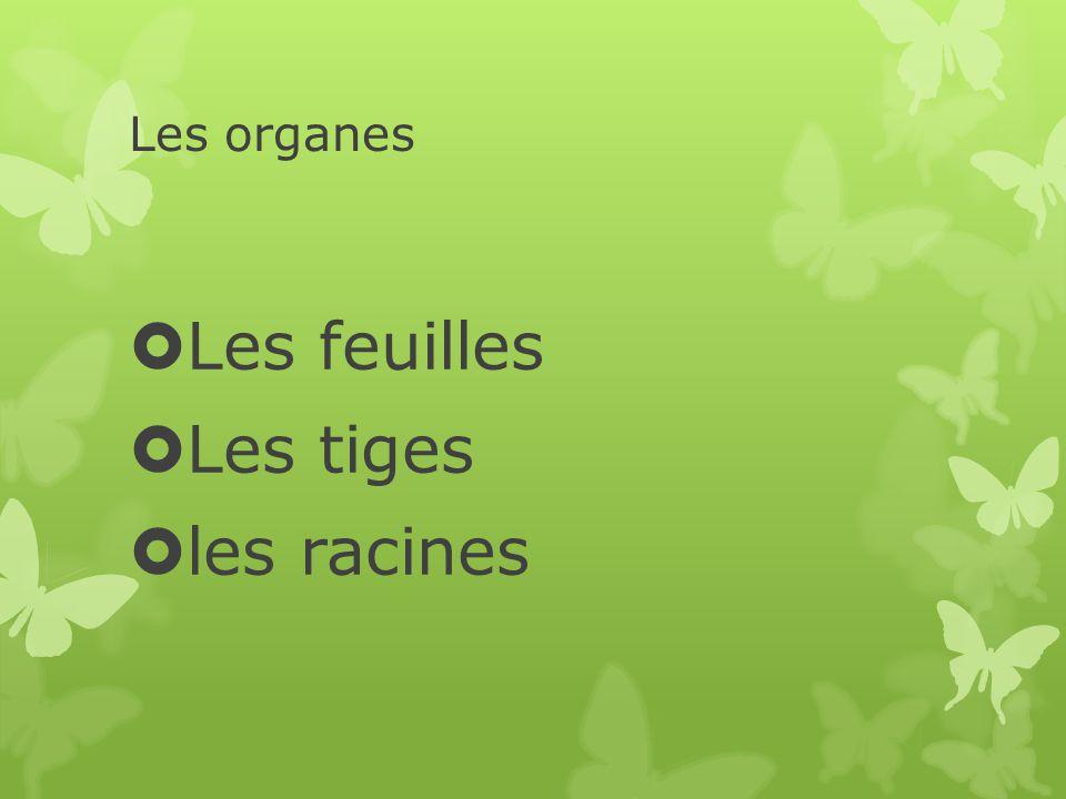 Les organes  Les feuilles  Les tiges  les racines