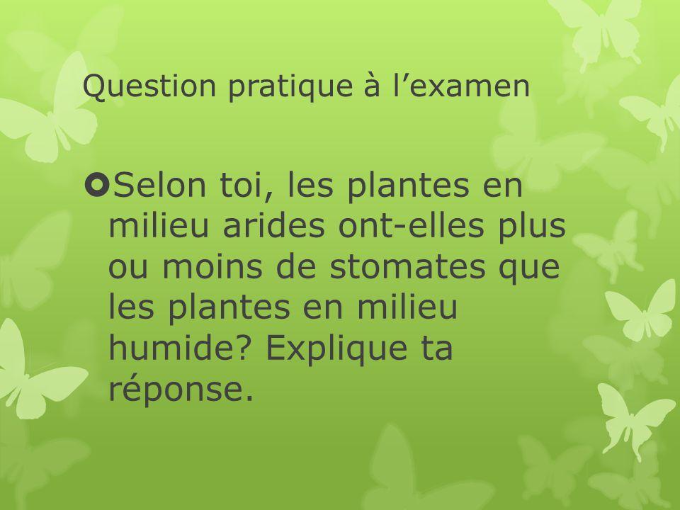 Question pratique à l'examen  Selon toi, les plantes en milieu arides ont-elles plus ou moins de stomates que les plantes en milieu humide.