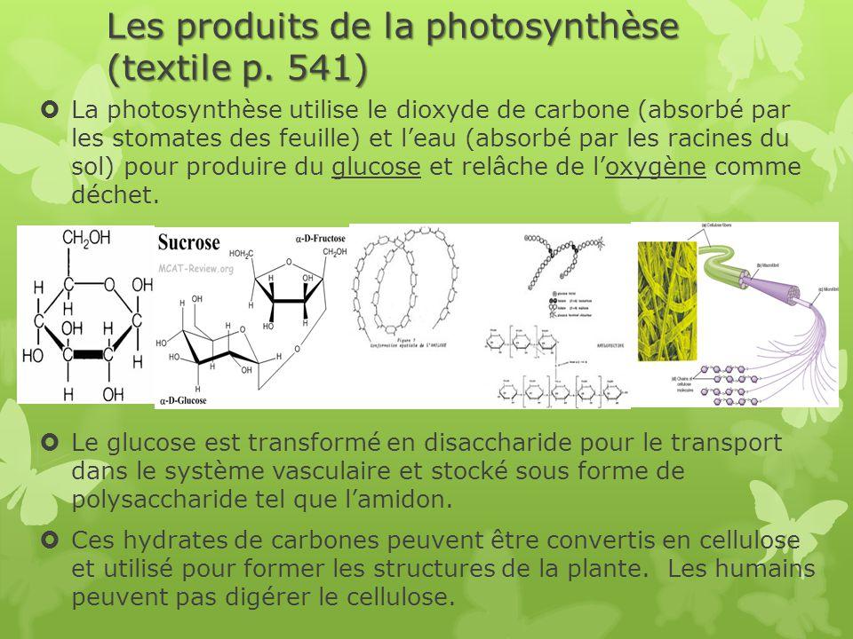 Les produits de la photosynthèse (textile p. 541)  La photosynthèse utilise le dioxyde de carbone (absorbé par les stomates des feuille) et l'eau (ab