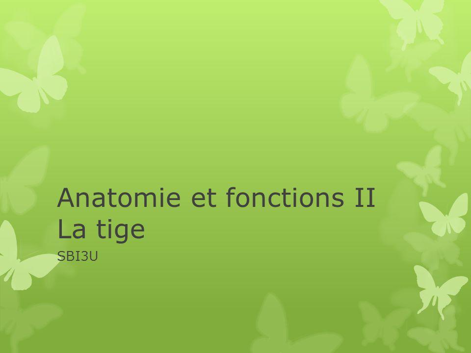 Anatomie et fonctions II La tige SBI3U
