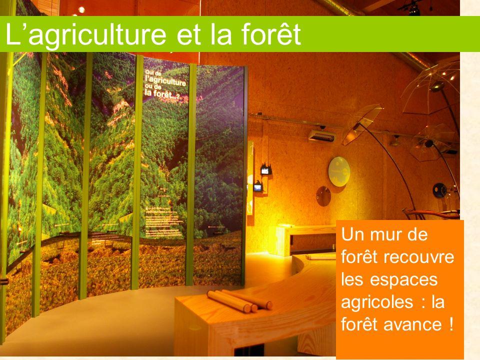 L'agriculture et la forêt Un mur de forêt recouvre les espaces agricoles : la forêt avance !