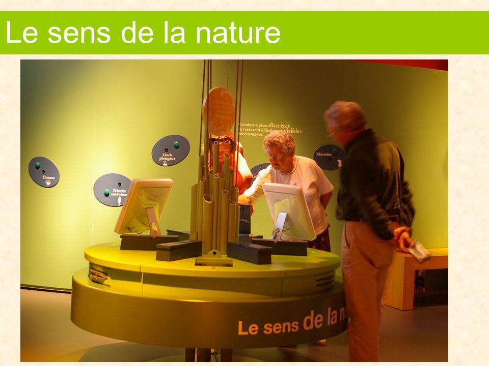 Des jeux de correspondance pour initier à la biodiversité des forêts du Haut-Jura et aux productions artisanales qui en sont issues L'agriculture et la forêt
