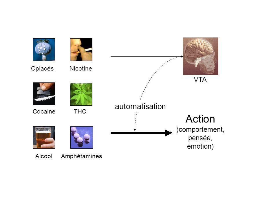 Action (comportement, pensée, émotion) VTA automatisation OpiacésNicotine Cocaine Amphétamines THC Alcool