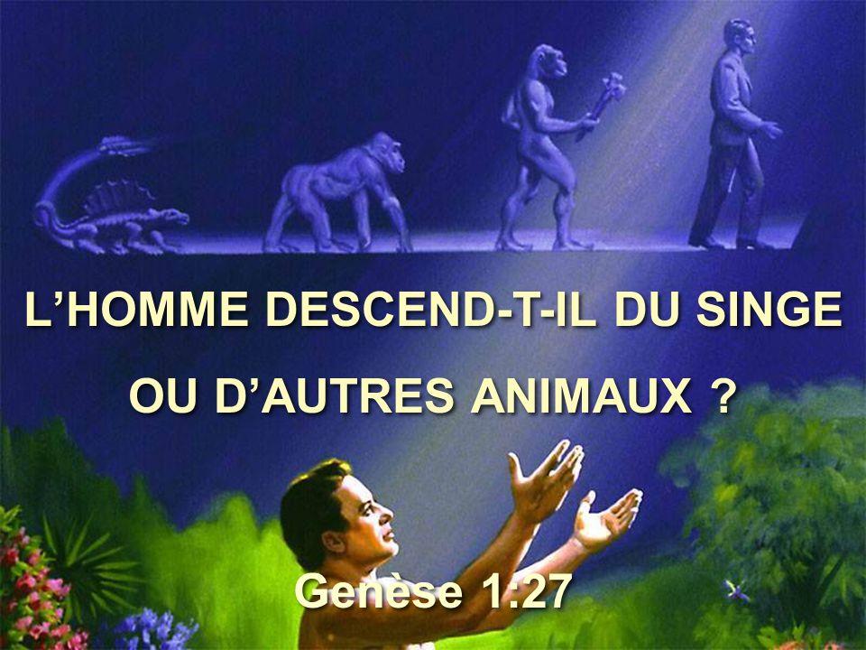 L'HOMME DESCEND-T-IL DU SINGE OU D'AUTRES ANIMAUX ? L'HOMME DESCEND-T-IL DU SINGE OU D'AUTRES ANIMAUX ? Genèse 1:27