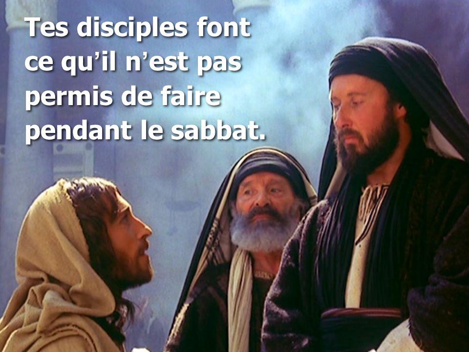 Tes disciples font ce qu ' il n ' est pas permis de faire pendant le sabbat.