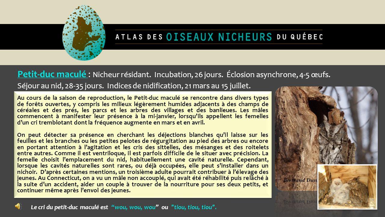 Petit-duc maculé : Nicheur résidant. Incubation, 26 jours. Éclosion asynchrone, 4-5 œufs. Séjour au nid, 28-35 jours. Indices de nidification, 21 mars