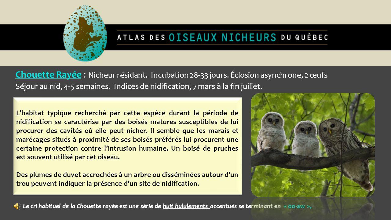 Chouette Rayée : Nicheur résidant. Incubation 28-33 jours. Éclosion asynchrone, 2 œufs Séjour au nid, 4-5 semaines. Indices de nidification, 7 mars à