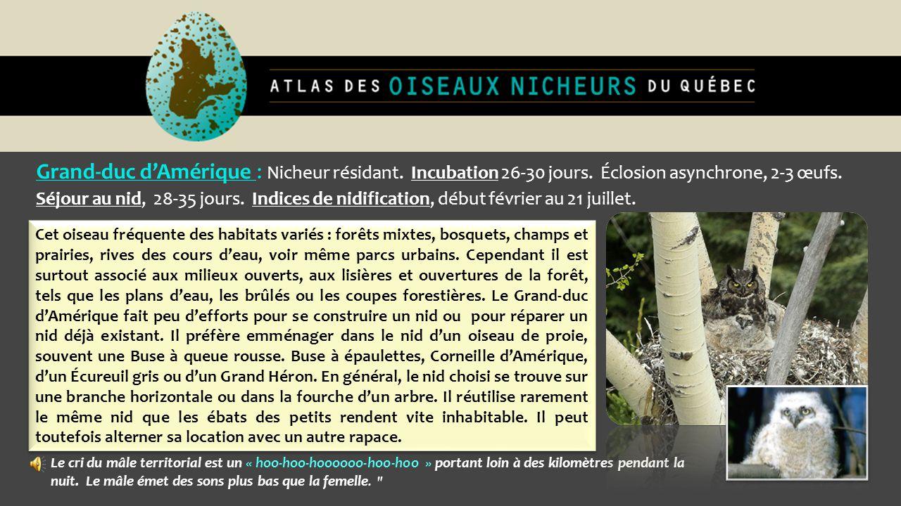 Grand-duc d'Amérique : Nicheur résidant. Incubation 26-30 jours. Éclosion asynchrone, 2-3 œufs. Séjour au nid, 28-35 jours. Indices de nidification, d