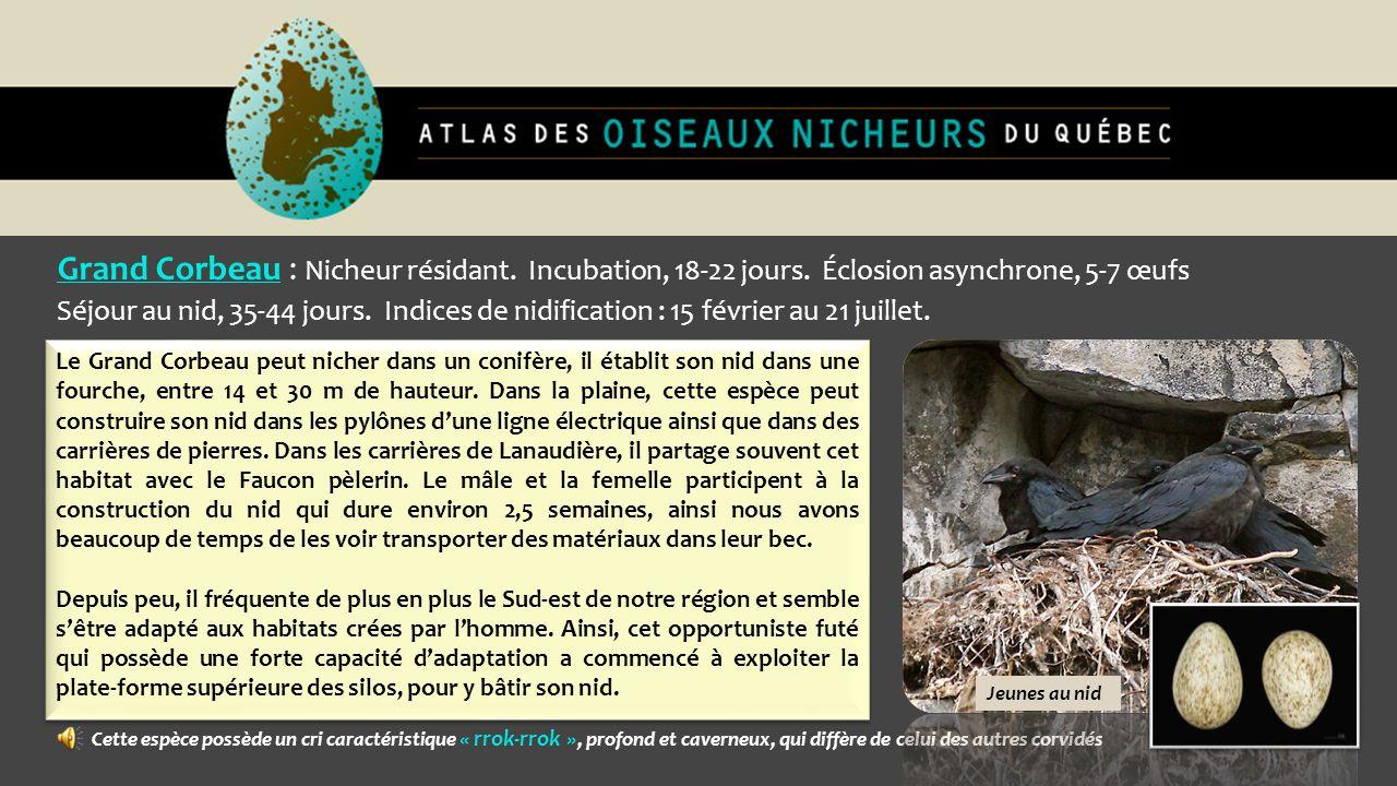 Grand Corbeau : Nicheur résidant. Incubation, 18-22 jours. Éclosion asynchrone, 5-7 œufs Séjour au nid, 35-44 jours. Indices de nidification : 15 févr