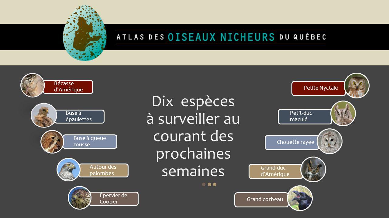 Grand-duc d'Amérique : Nicheur résidant.Incubation 26-30 jours.