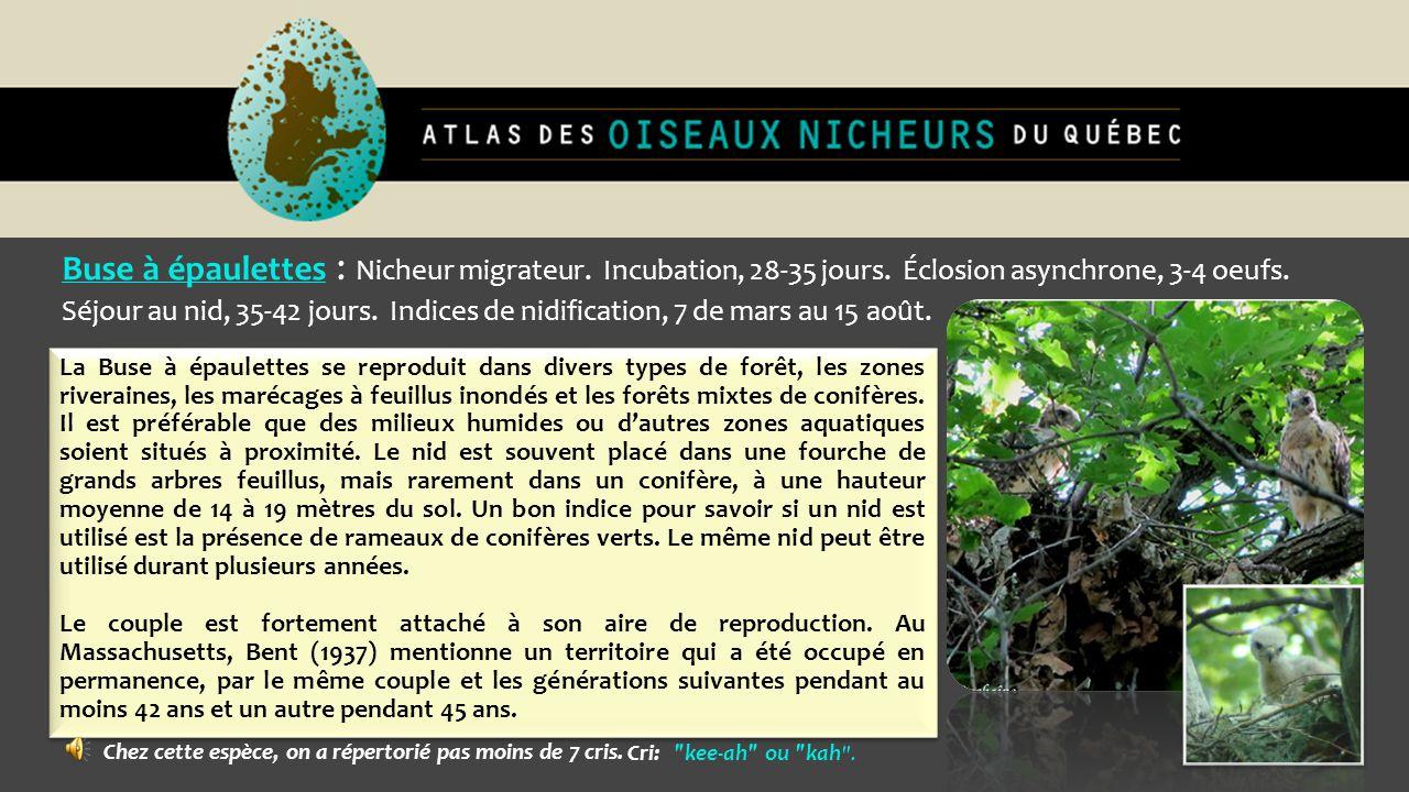 Buse à épaulettes : Nicheur migrateur. Incubation, 28-35 jours. Éclosion asynchrone, 3-4 oeufs. Séjour au nid, 35-42 jours. Indices de nidification, 7