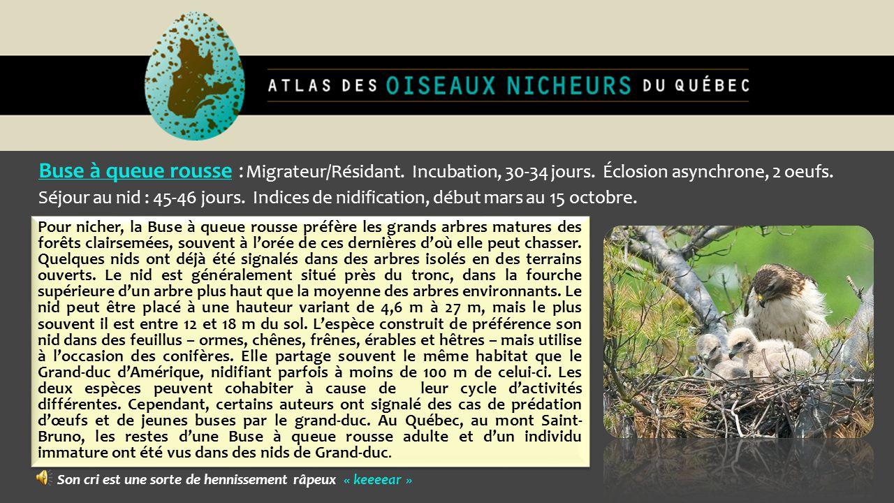 Buse à queue rousse : Migrateur/Résidant. Incubation, 30-34 jours. Éclosion asynchrone, 2 oeufs. Séjour au nid : 45-46 jours. Indices de nidification,