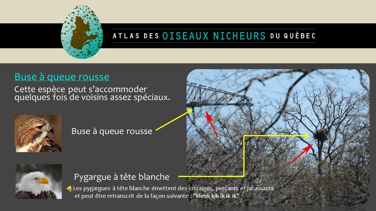 Autour des palombes : Nicheur résidant.Incubation, 30-38 jours.
