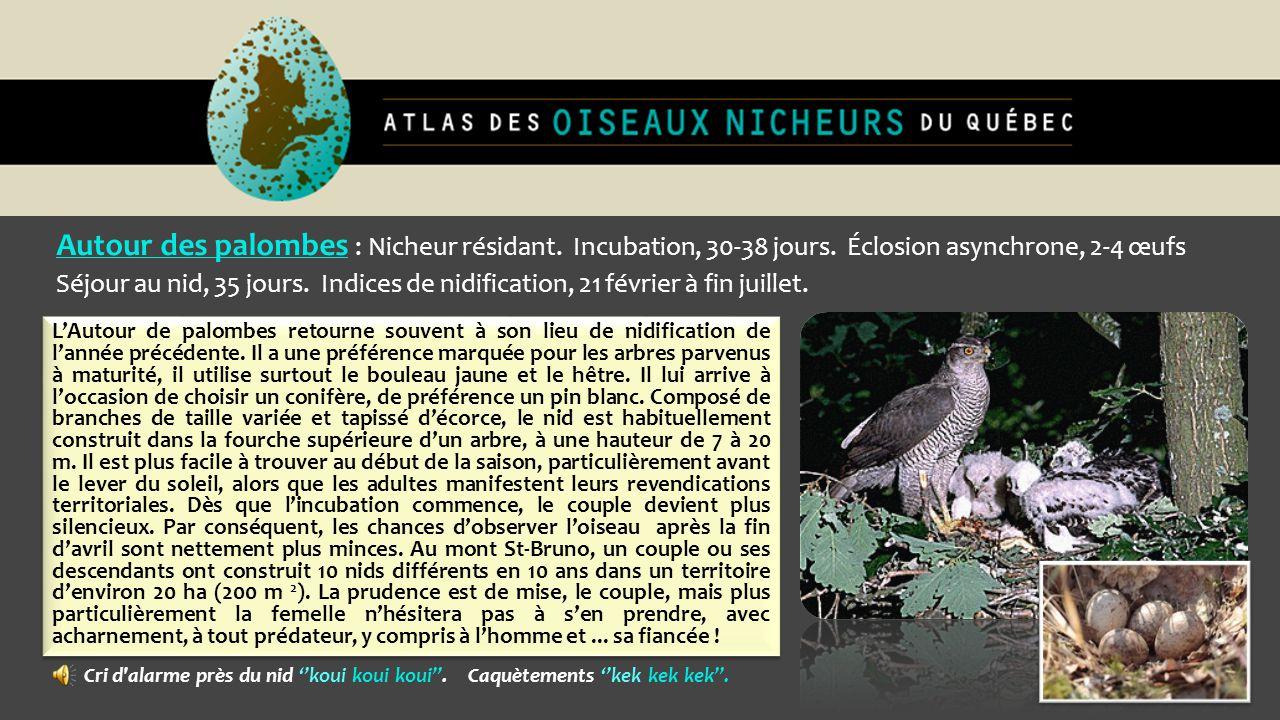 Autour des palombes : Nicheur résidant. Incubation, 30-38 jours. Éclosion asynchrone, 2-4 œufs Séjour au nid, 35 jours. Indices de nidification, 21 fé