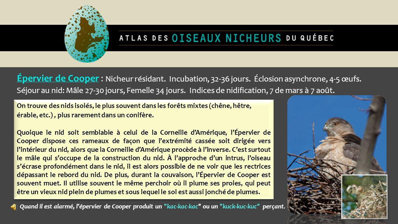 Épervier de Cooper : Nicheur résidant. Incubation, 32-36 jours. Éclosion asynchrone, 4-5 œufs. Séjour au nid: Mâle 27-30 jours, Femelle 34 jours. Indi