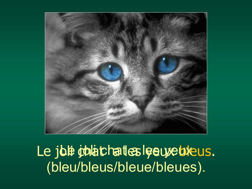 Le joli chat a les yeux bleus. Le joli chat a les yeux (bleu/bleus/bleue/bleues).