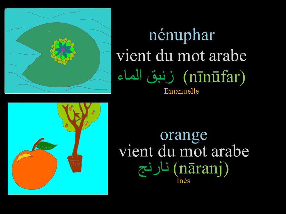 nénuphar vient du mot arabe زنبق الماء (nīnūfar) Emanuelle orange vient du mot arabe نارنج (nāranj) Inès