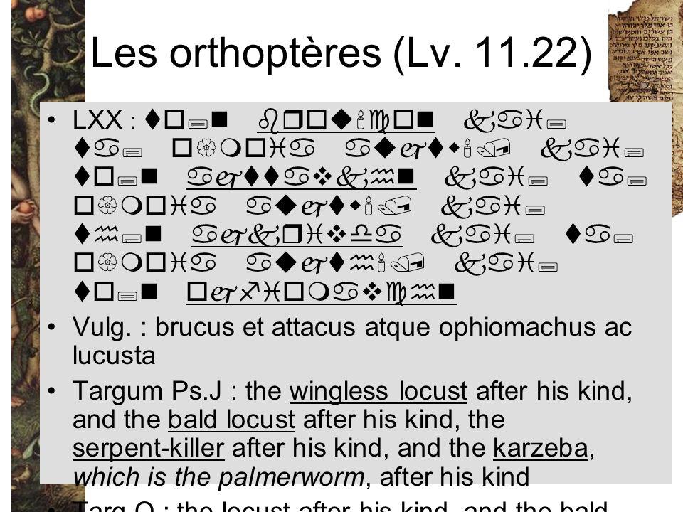 Les orthoptères (Lv. 11.22) LXX : to;n brou'con kai; ta; o{moia aujtw'/ kai; to;n ajttavkhn kai; ta; o{moia aujtw'/ kai; th;n ajkrivda kai; ta; o{moia