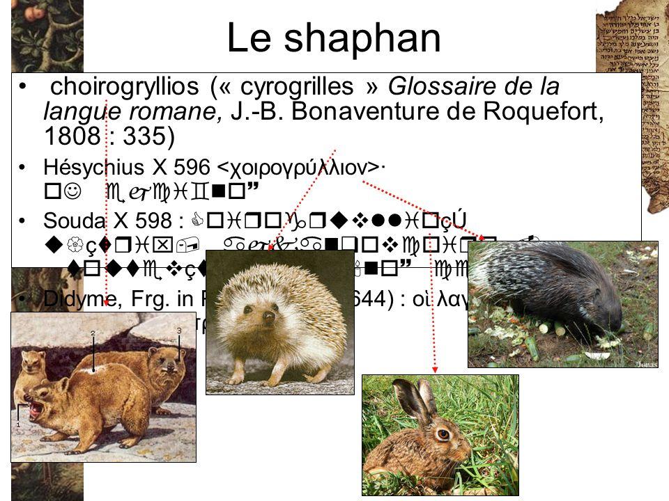 Le shaphan choirogryllios (« cyrogrilles » Glossaire de la langue romane, J.-B. Bonaventure de Roquefort, 1808 : 335) Hésychius X 596 ·  So