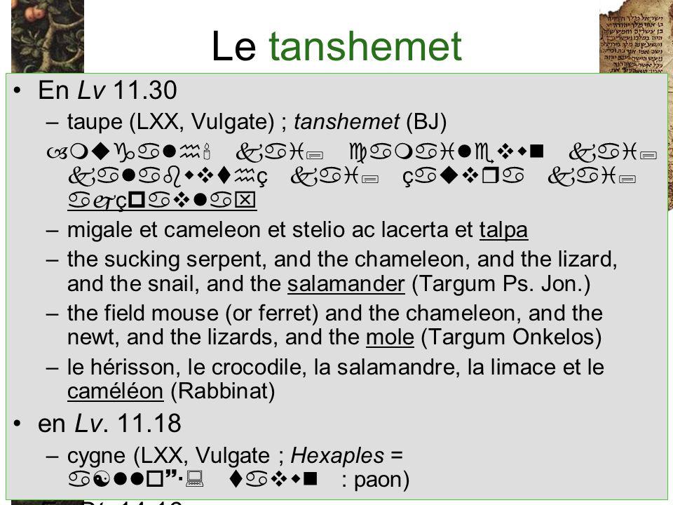 Le tanshemet En Lv 11.30 –taupe (LXX, Vulgate) ; tanshemet (BJ) –mugalh kai; camailevwn kai; kalabwvthç kai; çauvra kai; ajçpavlax –migale et cameleon et stelio ac lacerta et talpa –the sucking serpent, and the chameleon, and the lizard, and the snail, and the salamander (Targum Ps.