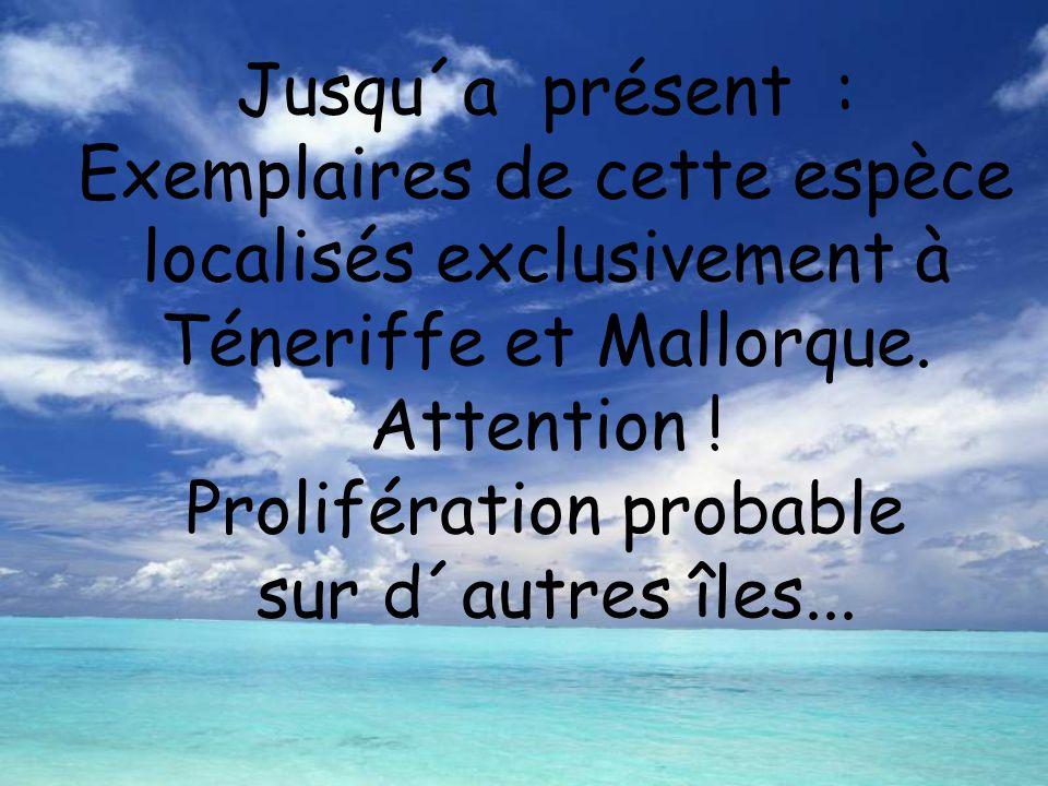 Jusqu´a présent : Exemplaires de cette espèce localisés exclusivement à Téneriffe et Mallorque.