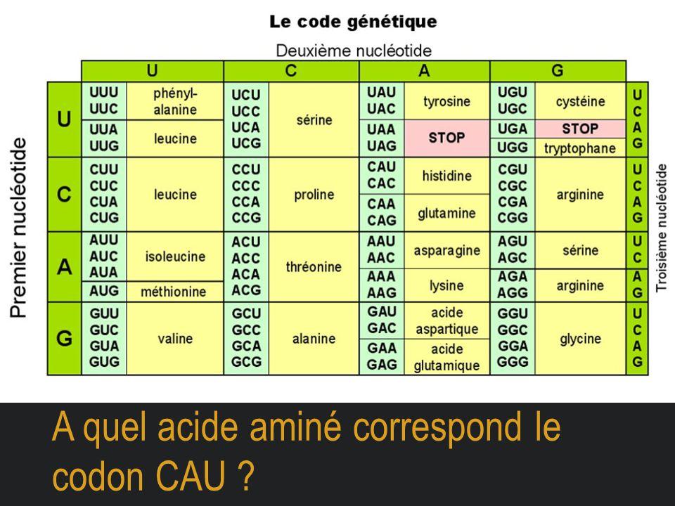 A quel acide aminé correspond le codon CAU ?