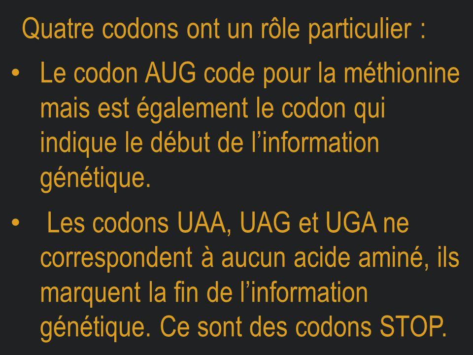 Quatre codons ont un rôle particulier : Le codon AUG code pour la méthionine mais est également le codon qui indique le début de l'information génétiq