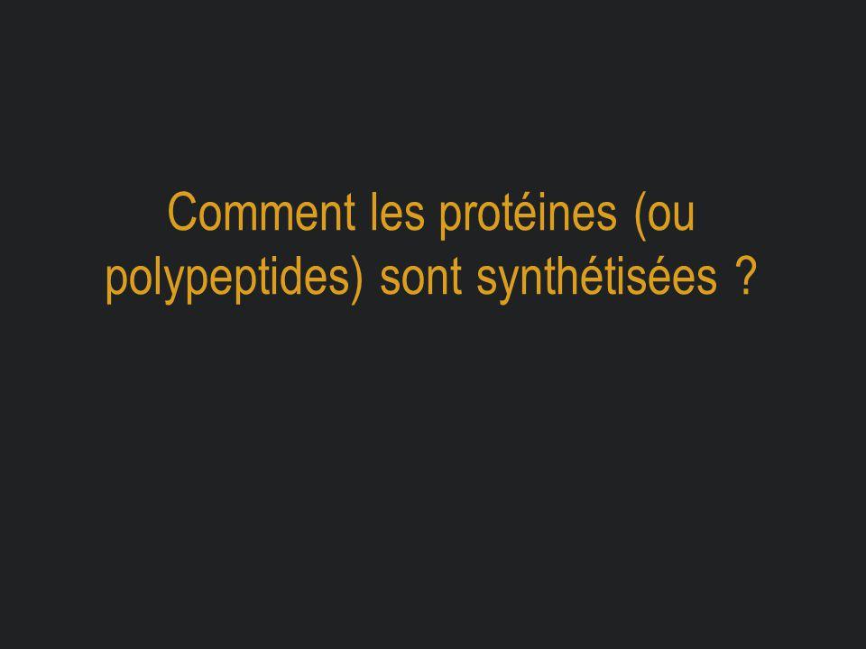 Comment les protéines (ou polypeptides) sont synthétisées ?