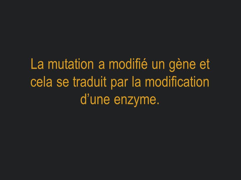 La mutation a modifié un gène et cela se traduit par la modification d'une enzyme.