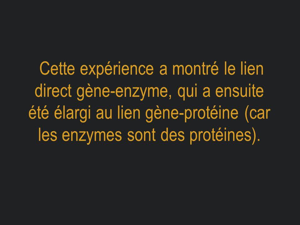 Cette expérience a montré le lien direct gène-enzyme, qui a ensuite été élargi au lien gène-protéine (car les enzymes sont des protéines).