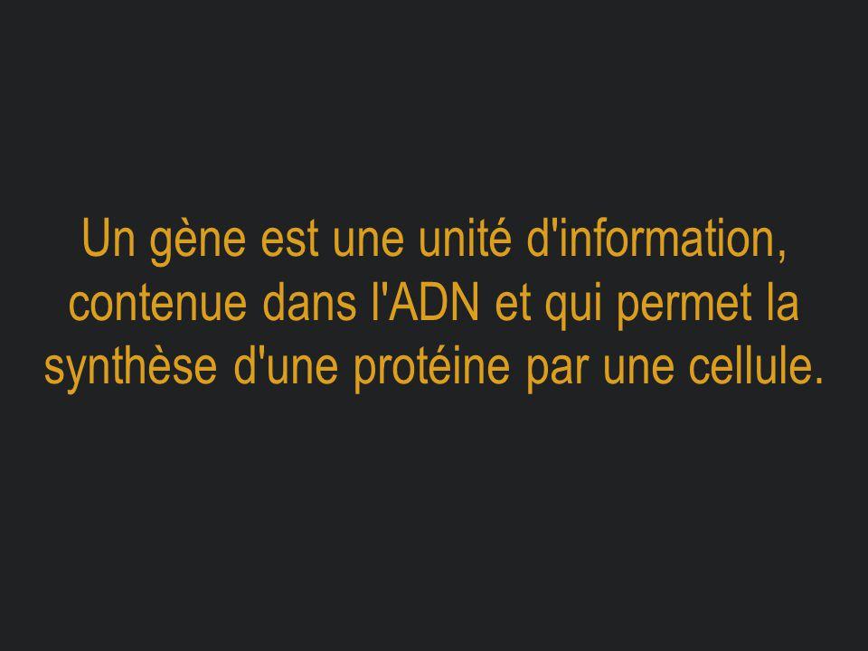 Un gène est une unité d'information, contenue dans l'ADN et qui permet la synthèse d'une protéine par une cellule.