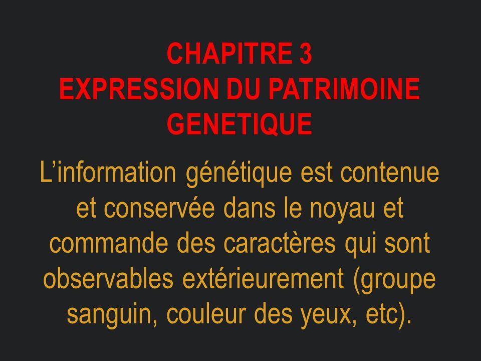CHAPITRE 3 EXPRESSION DU PATRIMOINE GENETIQUE L'information génétique est contenue et conservée dans le noyau et commande des caractères qui sont obse