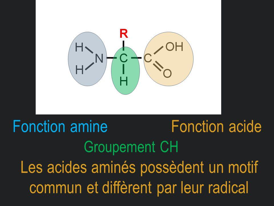 Fonction acideFonction amine Les acides aminés possèdent un motif commun et diffèrent par leur radical Groupement CH