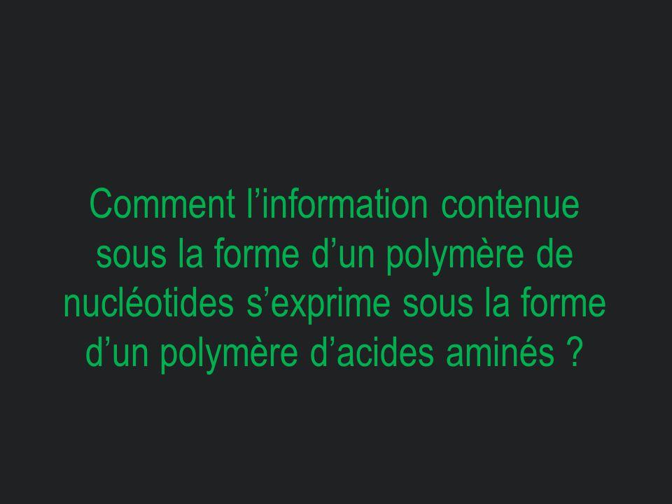 Comment l'information contenue sous la forme d'un polymère de nucléotides s'exprime sous la forme d'un polymère d'acides aminés ?